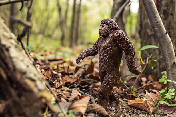 On the hunt for the elusive bigfoot